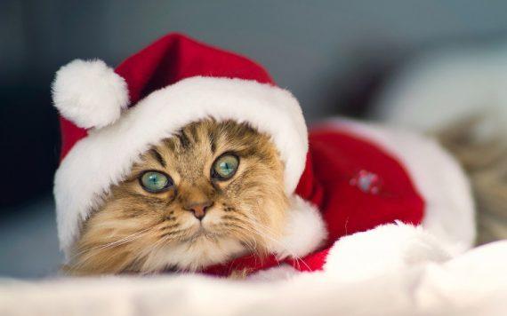 La época navideña para las mascotas