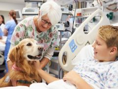 Perros terapéuticos