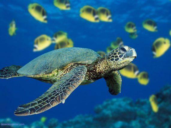 La odisea del rescate a tortugas marinas
