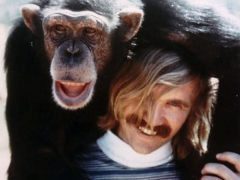 Washoe la chimpancé