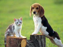 10 diferencias entre gatos y perros