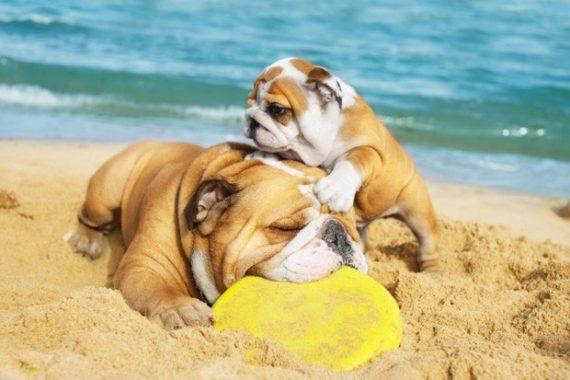Cuidar a tu perro en verano