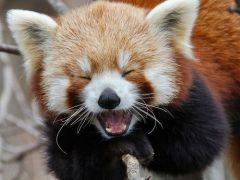 10 curiosidades de animales que te harán extremadamente feliz