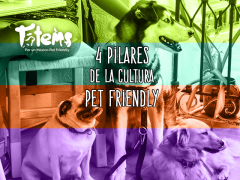 Los 4 de la Cultura Pet Friendly