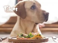 Historia de la alimentación canina