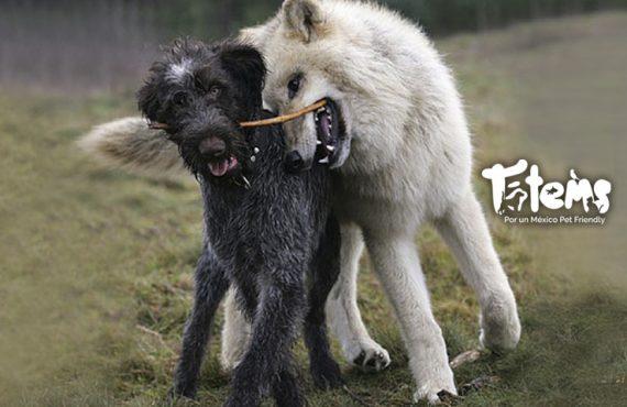 ¿De dónde vienen los perros?