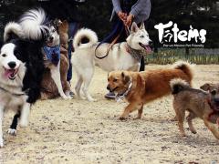 ¿Qué tan buenos son los parques de caninos?