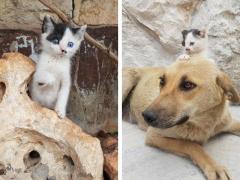Gatito huérfano conoce a una perra que perdió a su camada y se convierte en el cachorro que nunca tuvo.