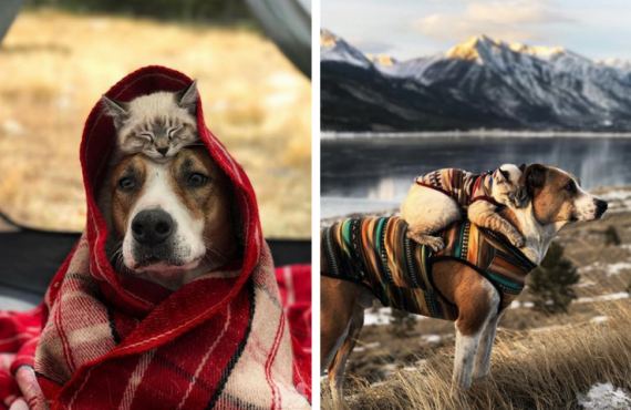 Henry y Baloo: dos amigos aventureros inseparables