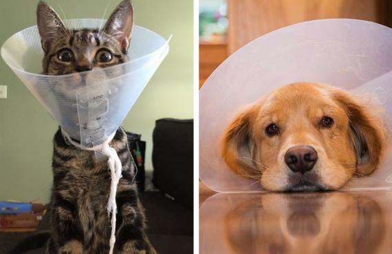Mitos sobre la esterilización de perros y gatos