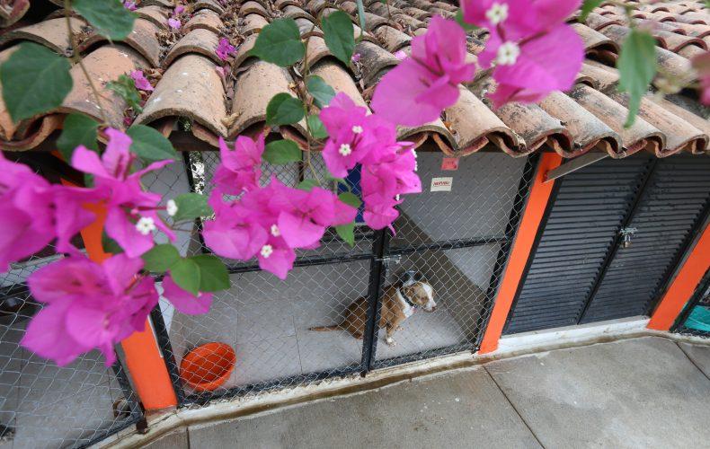 Puerto Vallarta, ejemplo de desarrollo de la cultura pet friendly y tenencia responsable de tótems