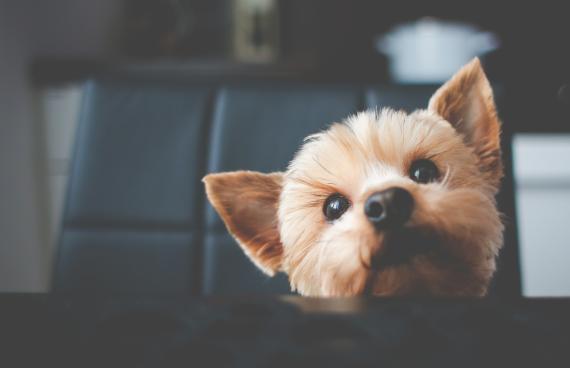 ¿Porqué a los perros les afecta la separación?