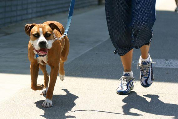 La ciencia de pasear al perro