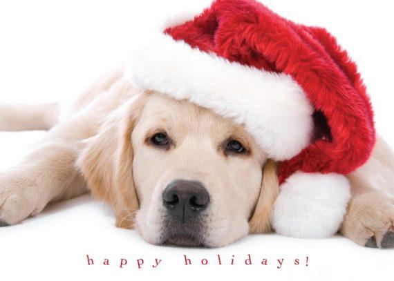 Animales en tarjetas navideñas