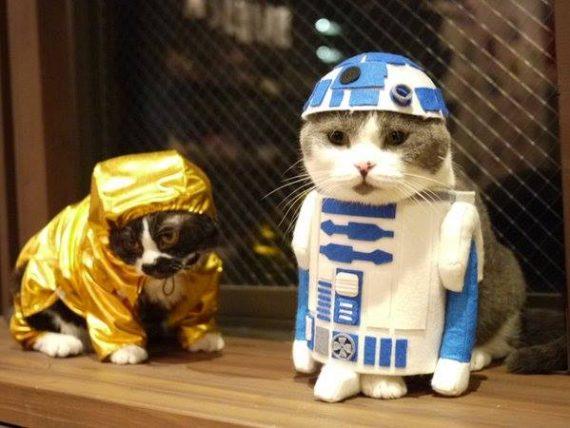 Mascotas Fuera de Este Mundo