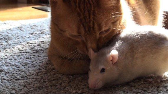 Rata y Gato: La amistad perfecta