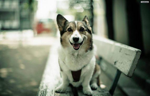 La capacidad sentimental de los perros
