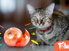 Alimentos que NO debe consumir tu gato