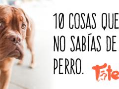 10 Cosas que no sabías de tu perro