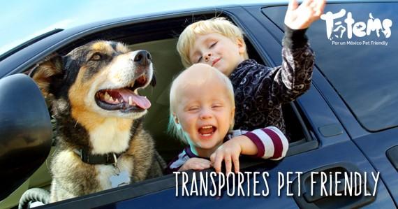 Los mejores transportes pet friendly de México