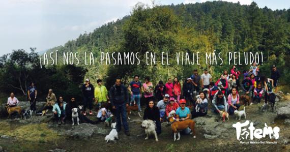 Festival CineCamping México en el Parque Nacional el Chico en Hidalgo, un viaje para recordar con los Tótems.