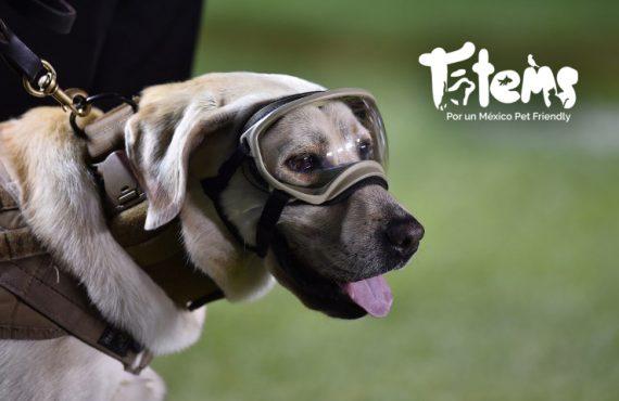 Conoce sobre los perros de rescate