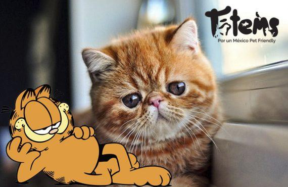 Un poco de la historia de Garfield