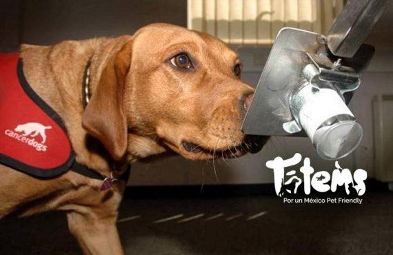 Los perros detectan el cáncer en los humanos