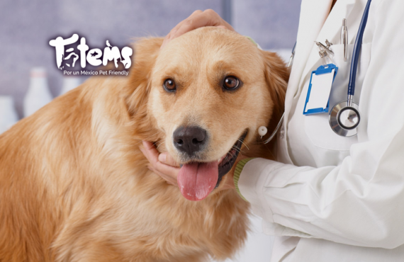 Esterilización en Hembras Caninas