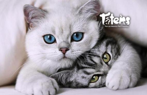 10 datos fascinantes sobre los gatos