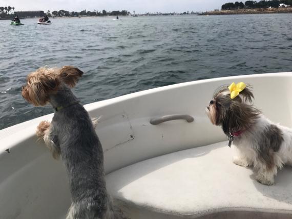 Coco y Totopo en San Diego California
