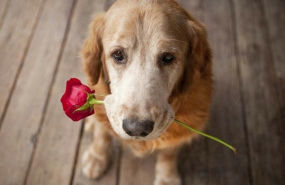 8 cosas que hace tu perro para demostrar amor
